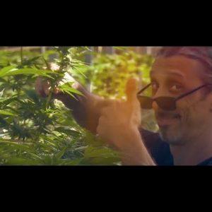 Indoor Cannabis Growing Tips: Optimal Genetics & More / Kyle Kushman / Green Flower