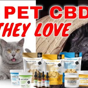Pet CBD Care for Your Best Friend with Organic Oats, Barley and Oils Honest Paws | CBD Headquarters
