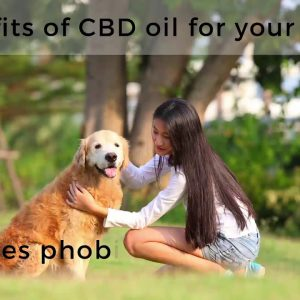 Benefits of CBD oil for pets