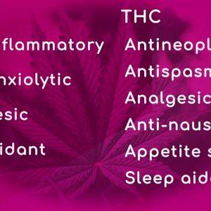 Benefits of CBD & THC