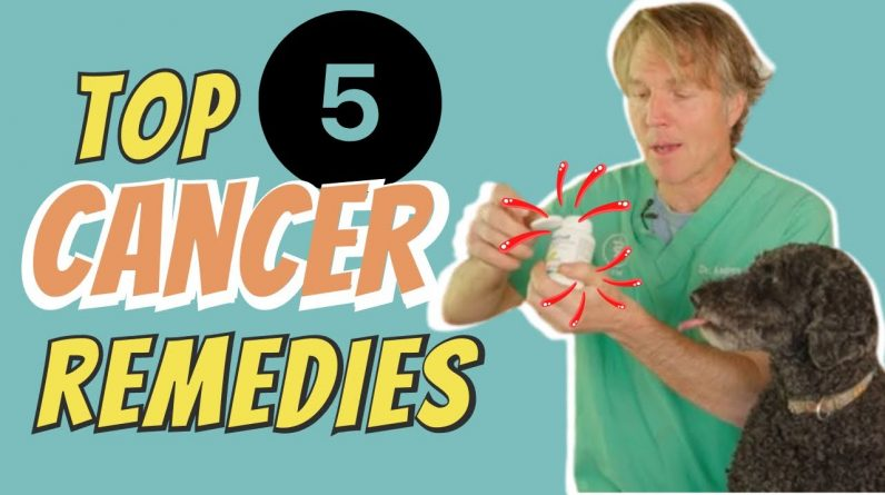 Cancer in Dogs and Cats: Top 5 Natural Remedies