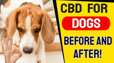 CBD For Dogs Before And After (RESULTS!)   CBD For Pets