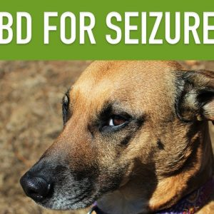 CBD FOR DOGS WITH SEIZURES - Can CBD Treat Epilepsy in Pets?