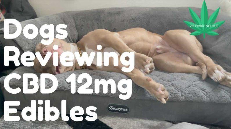 #CBD #Pets CBD Dog Treats Review