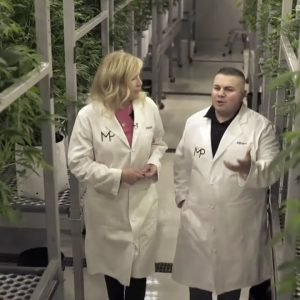 How CBD Is Extracted From Cannabis   TODAY