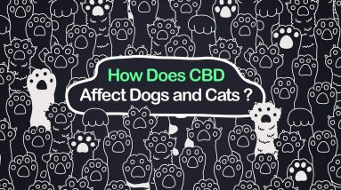 How Does CBD Affect Dogs and Cats?