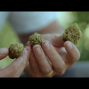 How to Judge Cannabis as a Connoisseur: Casey O'Neill / Green Flower