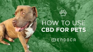 How to use CBD for Dogs