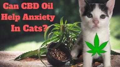 I Gave My Anxious Cat CBD Hemp Oil And Here's What Happened