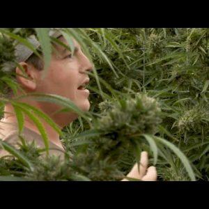 Exclusive: Cannabis Garden Tour w/Mean Gene - Green Flower Cannabis Cultivation Course