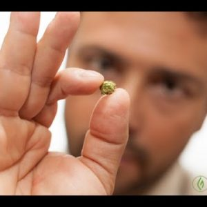 WHAT IS CANNABIS MICRODOSING? Mandee Lee / Try This / Green Flower