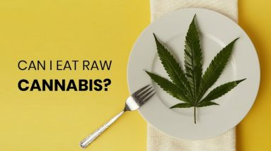 Can you Eat Raw Cannabis?
