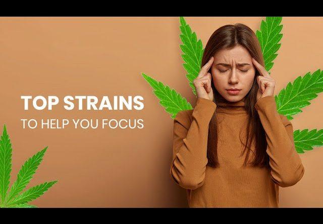 Cannabis Strains for Focus