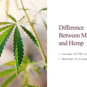 Educational Series (6 of 31): The Difference Between Hemp and Marijuana