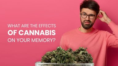 The Effects of Cannabis on Short & Long Term Memory