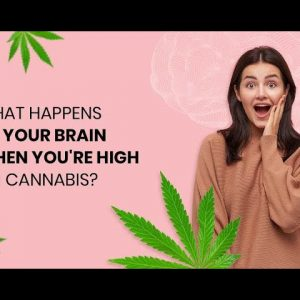 What Happens To Your Brain When You're High On Cannabis?