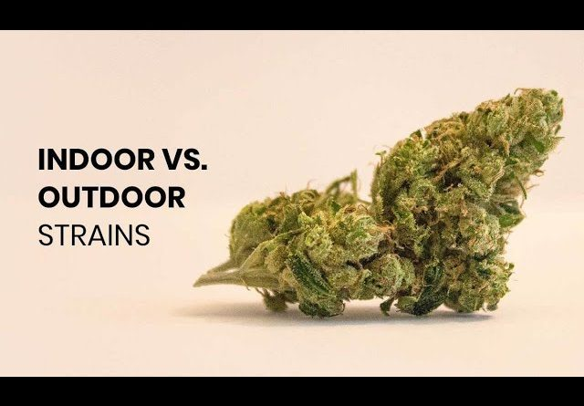 What's The Difference Between Indoor and Outdoor Strains?
