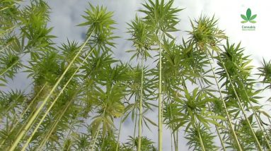 Why aren't we building more with hemp? - Part 1